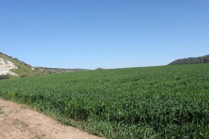 Elah Valley where David caught Goliath